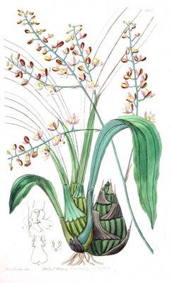 Canvastavlor Illustration av växt