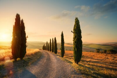 Canvastavlor italy tuscany countryside rolling hills; summer farmland and country road;