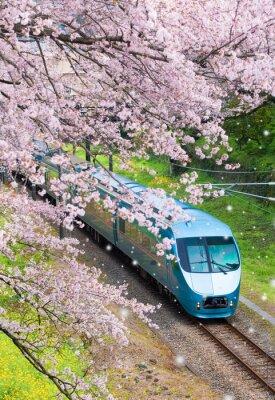 Canvastavlor Japan tåg i sakura körsbärsblomning hav på Yamakita Town, Kanagawa prefektur
