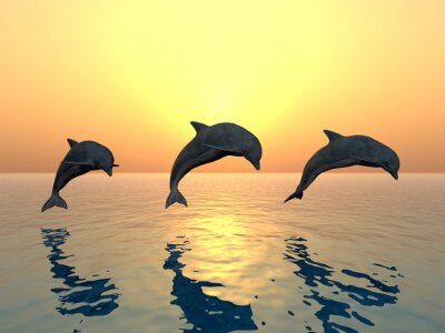 Canvastavlor jumping Dolphins