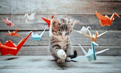 Canvastavlor Kattunge leker med papperstranor