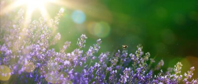 Canvastavlor konst sommaren eller våren vacker trädgård med lavendel