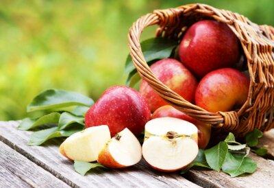 Canvastavlor Korg med färska äpplen