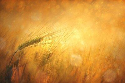 Canvastavlor Landsbygd solig vetefält fantasy bakgrund