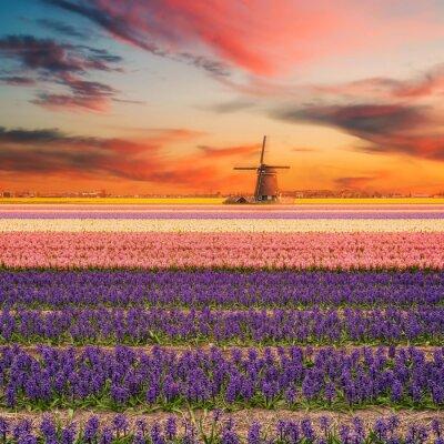 Canvastavlor Landskap med Forsknings Hyacinth