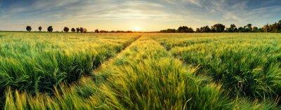 Canvastavlor Landskapet med vetefält på solnedgången
