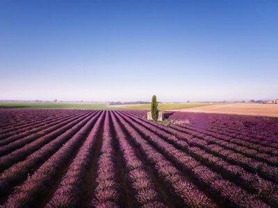 Canvastavlor lavendel fält med kapell