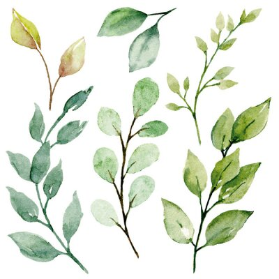 Canvastavlor Leaves watercolor set. Hand painting floral illustration. Green leaf, plants, foliage, branches isolated on white background.