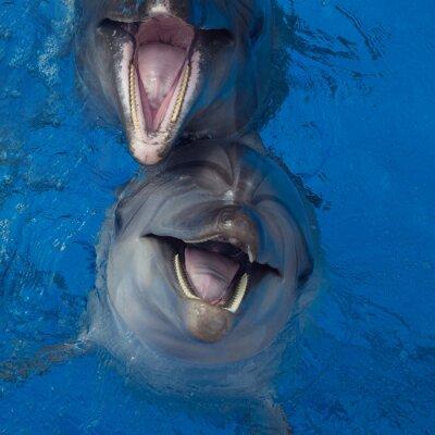 Canvastavlor leende delfin