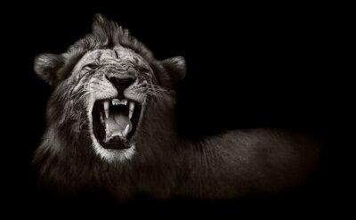 Canvastavlor Lejon visar farliga tänder