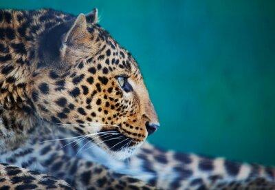 Canvastavlor leopard