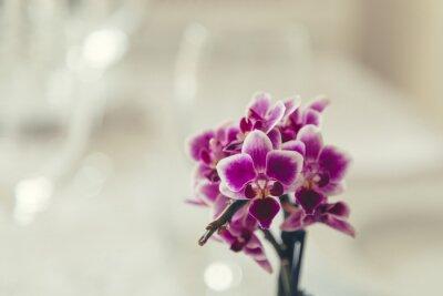 Canvastavlor Lila blomma i blom på en krämig vit bakgrund