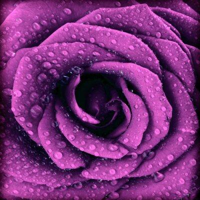 Canvastavlor Lila mörk rosa bakgrund