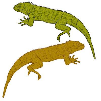 Canvastavlor Lizard är goanna siluett på en vit bakgrund. vektor