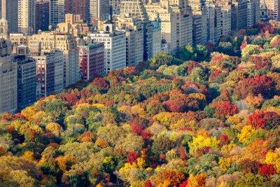 Canvastavlor Lysande höstfärger i Central Park lövverk i sen eftermiddag. Flygfoto mot Central Park West. Upper West Side, Manhattan, New York
