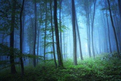 Canvastavlor Magiska blå färg ljus i mystiska skogen
