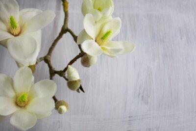 Canvastavlor Magnolia blommor