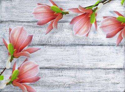 Canvastavlor Magnolia blommor på bakgrund av lumpen träplankor