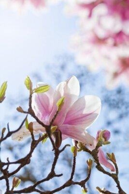 Canvastavlor Magnolienblüte