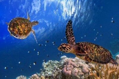 Canvastavlor Maldivian Sea Turtle Flytande