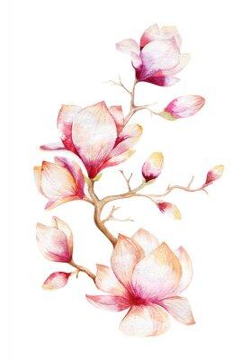 Canvastavlor Målning Magnolia blomma tapeter. Handritad vattenfärg blommig