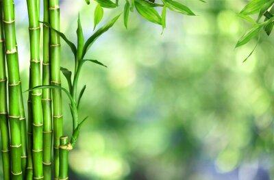 Canvastavlor Många bambustjälkar på bakgrund