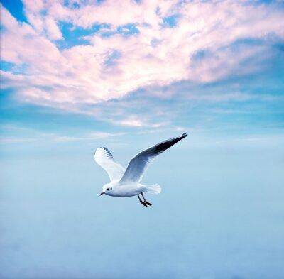 Canvastavlor mås skyhöga mot en moln himmel