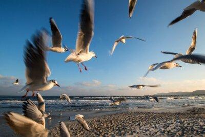 Canvastavlor Måsar i flykten baltiska kusten Binz Tyskland