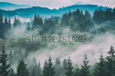 Canvastavlor Mistiga karpatiska bergsdalen efter regnet. Grunge vintage stilisering.