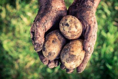 Canvastavlor Mogna potatis i händerna