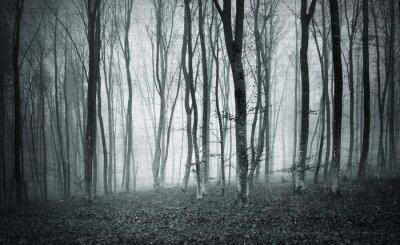 Canvastavlor Monokrom svartvit grunge texturerad färg dimmigt mystic skogsträd landskap.