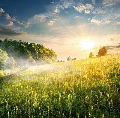 Canvastavlor Morgon över blommande fält
