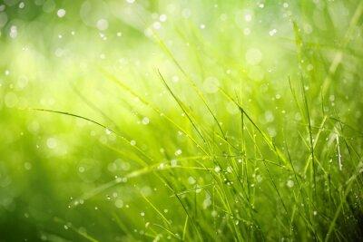 Canvastavlor Morgondagg på våren gräs