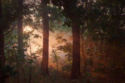 Canvastavlor morgondimman i skogen