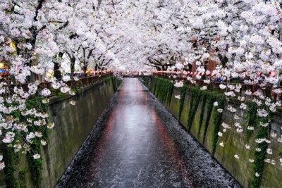 Canvastavlor Nakameguro Kanal i Tokio während der Kirschblüte im Frühling