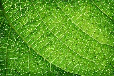 Canvastavlor Närbild av ett grönt blad