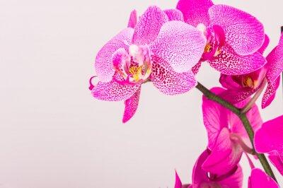 Canvastavlor Närbild av orkidé blomma