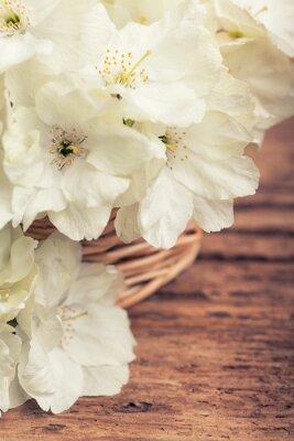 Canvastavlor Närbild av vita blommande körsbärs i en korg i vintagestil