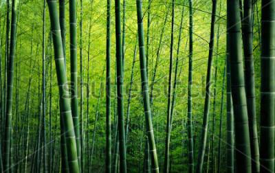 Canvastavlor Naturbegrepp för bambuskogträd