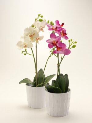 Canvastavlor orchidea