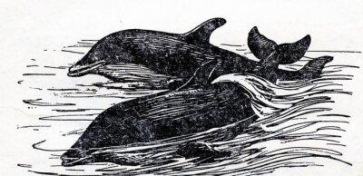 Canvastavlor Öresvin (Tursiops truncatus)