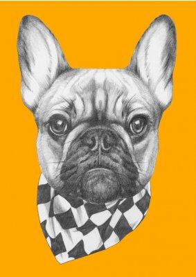 Canvastavlor Original- dra av Fransk bulldogg med halsduk. Isolerad på färgad bakgrund