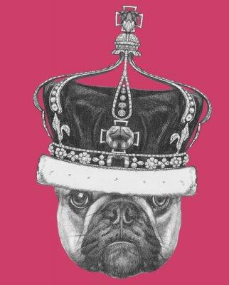 Canvastavlor Original- dra av Fransk bulldogg med kronan. Isolerad på färgad bakgrund