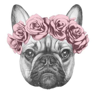 Canvastavlor Original- dra av Fransk bulldogg med rosor. Isolerad på vit bakgrund