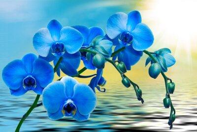 Canvastavlor Orkidé närbild