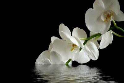 Canvastavlor orkidé reflexion
