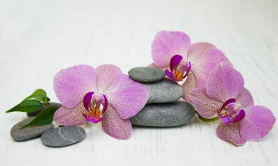 Canvastavlor Orkidéer och massage stenar