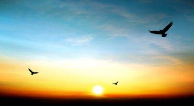 Canvastavlor örn som flyger i skyn vacker solnedgång