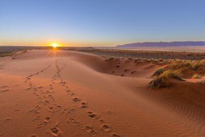 Canvastavlor Oryx spår till solnedgång