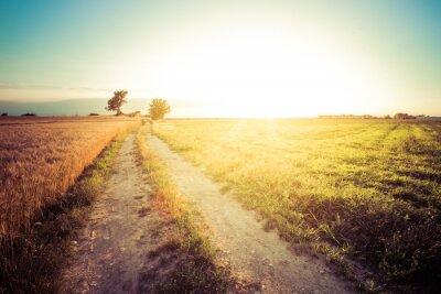 Canvastavlor Paesaggio di campagna e Campi di grano al tramonto